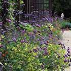 Extérieurs suppression des tontes entretiens réduits espace extérieurs jardin écrin végétal économique pratique jardin gravier
